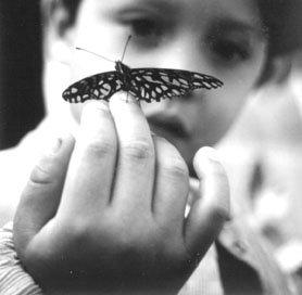 mariposa3.jpg